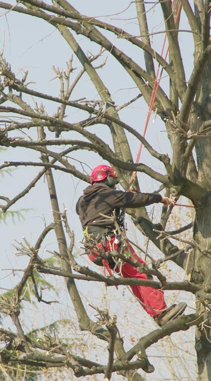 Près d'Égly, élagage et abattage d'arbres